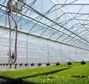 Above Ground Greenhouse Crops